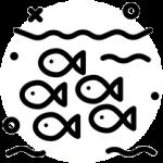 poisson fish spa garra rufa troyes aube